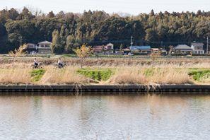 Yachiyo (Chiba)